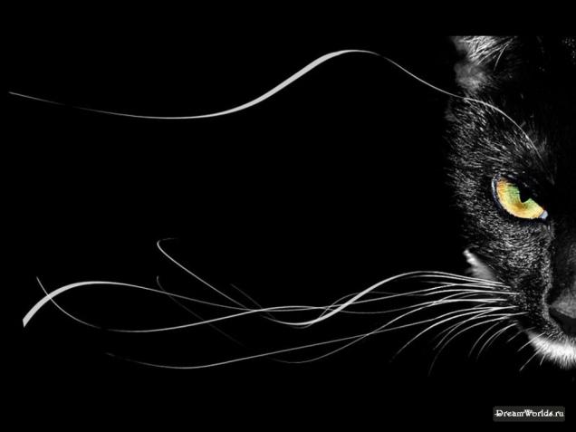 Любимый цвет черный